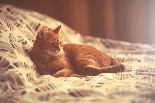 Обои Рыжий кот отдыхает на постели