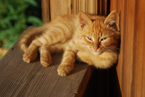 Обои Рыжий кот лежит на подоконнике открытого окна и греется на солнышке