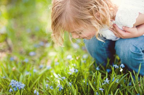 Обои Девочка наклонилась к голубым цветам в траве, чтобы почувствовать их аромат