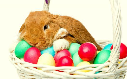 Обои Рыжий кролик лежит на разноцветных яйцах в корзинке на белом фоне