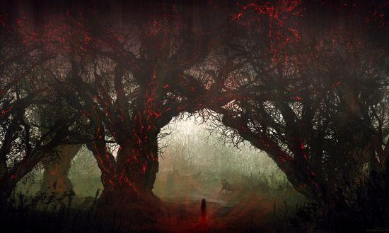 Обои Мистический ночной лес