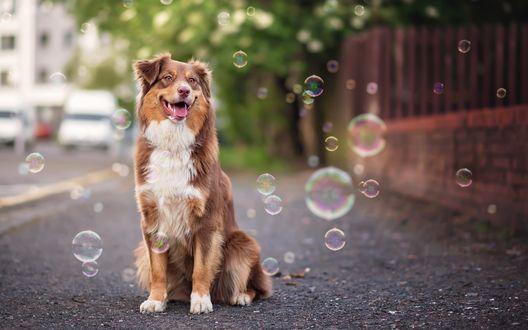 Обои Собака в окружении мыльных пузырей