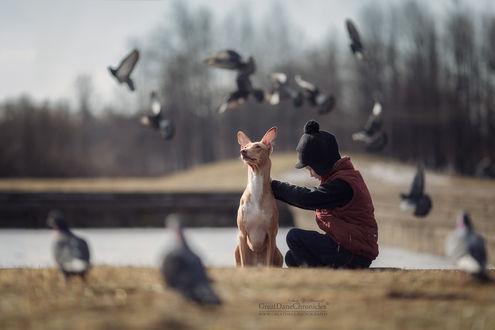 Обои Ребенок сидит рядом с собакой в окружении голубей, фотограф Андрей Селиверстов