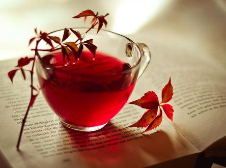 Обои Листья и кружка красного чая, которая стоит на книге