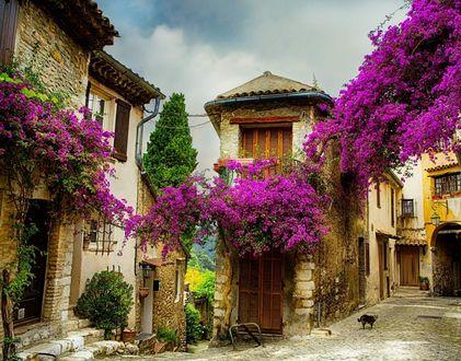 Обои Узкие улочки небольшого городка, залитые солнцем, с буйно разросшимися яркими цветами на балконах, вдали стоит кот