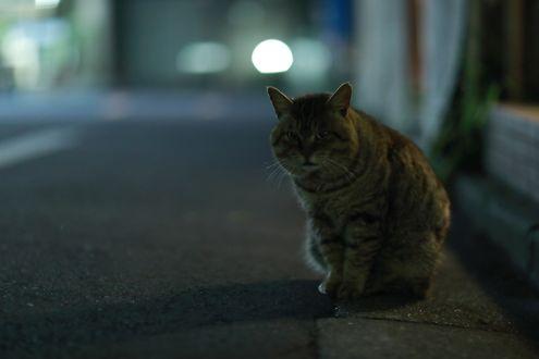Обои Серый кот ночью сидит на асфальте