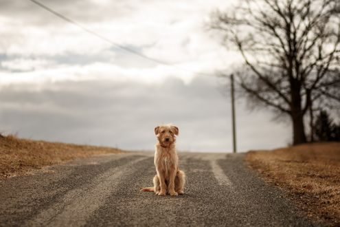 Обои Ждущий на дороге пес
