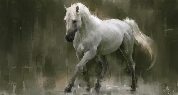 Обои Портрет красивой белой лошади, by Lee Kent