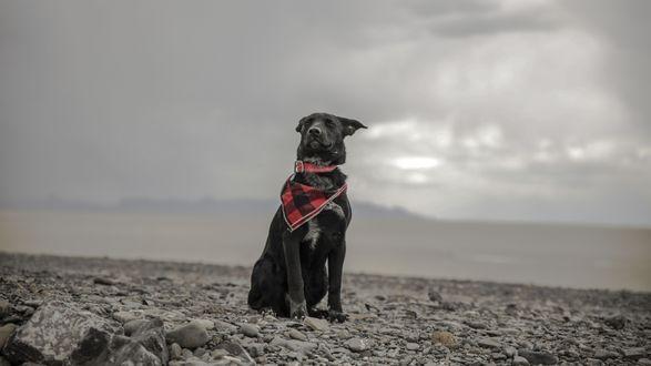 Обои Черный пес сидит на камнях, на фоне тумана