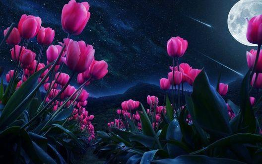 Обои Тюльпаны под ночным небом