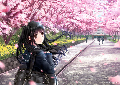 Обои Девушка-школьница идет в школу, рядом цветет сакура, автор Kazuharu Kina