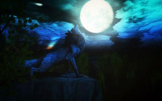 Обои Серый волк стоящий на краю скалы воет на луну