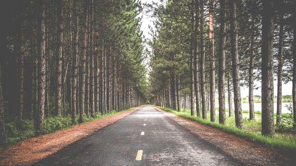 Обои Дорога проходящая сквозь лес