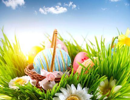 Обои Пасхальные яйца в плетеной корзине на траве с ромашками и нарциссами