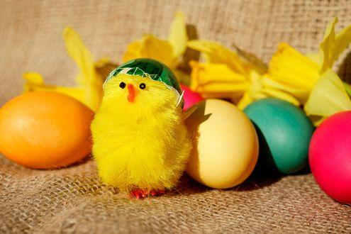 Обои Пасхальные яйца и желтый игрушечный цыпленок