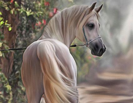 Обои Белая лошадь стоит к нам хвостом, by Ray Guselli