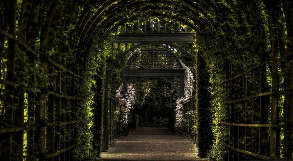 Обои Зеленый туннель, освещенный пробивающимся солнцем, ведет вдаль