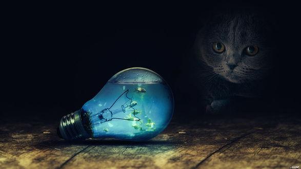 Обои Кот смотрит на лампочку, внутри которой плавают рыбки, by FantasyArt0102