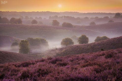 Обои Восход над лавандовым полем, Netherlands / Нидерланды, фотограф Martin Podt