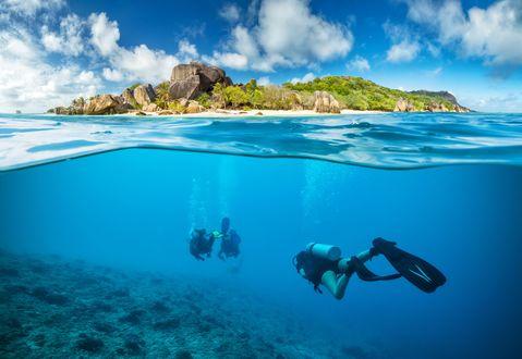Обои Аквалангисты плывут под водой к зеленому острову