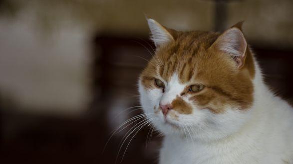 Обои Грустный кот на размытом фоне