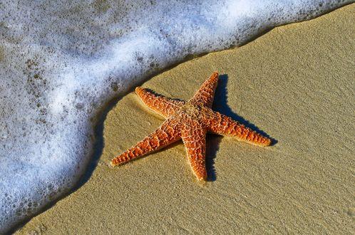 Обои Морская звезда на песке и пена