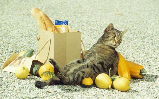 Обои Серый полосатый кот разлегся на рассыпавшихся овощах, рядом с бумажными пакетами для покупок