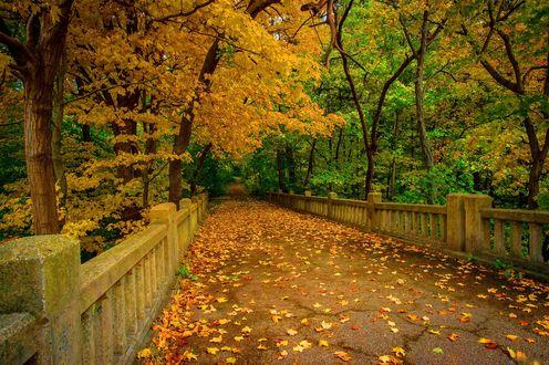 Обои Осенние клены в парке усыпали каменный мост желтыми листьями