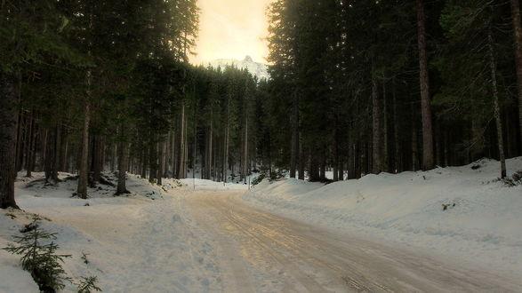 Обои Оледеневшая дорога в зимнем хвойном лесу