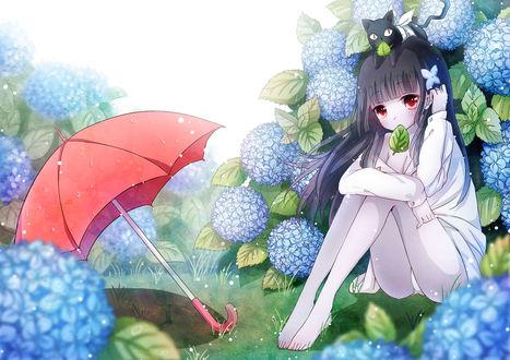 Обои Sanka Rea / Санка Рэа с котиком Баабу / Baabu на голове, сидит на траве возле красного зонта среди цветущей гортензии, персонажи из аниме Санкарея / Sankarea