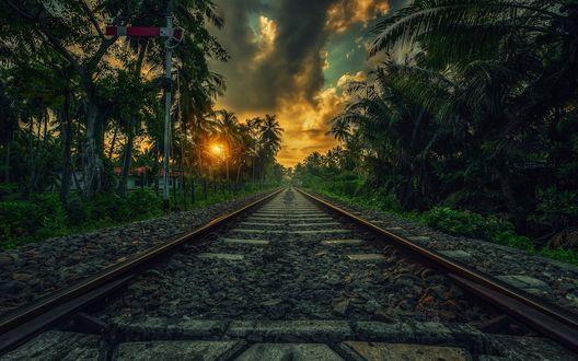 Обои Железная дорога проходящая через тропические джунгли