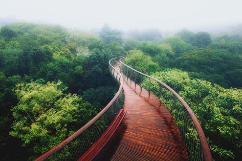 Обои Деревянный мост над верхушками деревьев
