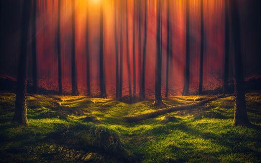 Обои Лучи солнца проникают в летний лес