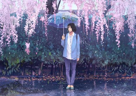 Обои Парень с зонтом под глицинией, by げみ*ティアむ04b