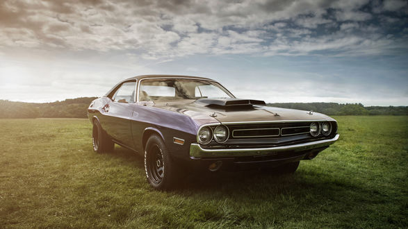 Обои Машина Dodge Challenger стоит на поляне