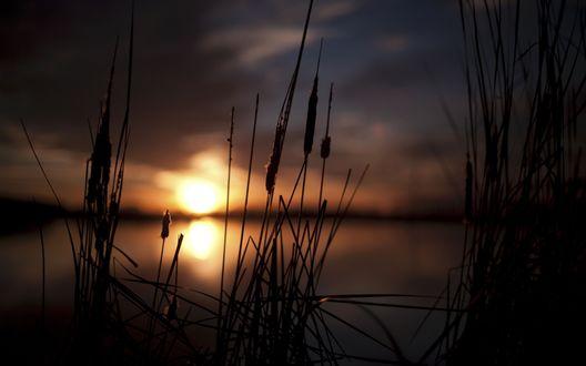 Обои Заходящее солнце отражается в глади болота, на переднем фоне камыши