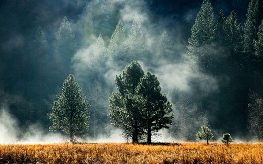 Обои Деревья на фоне клубящегося тумана, на переднем плане пожелтевшая трава