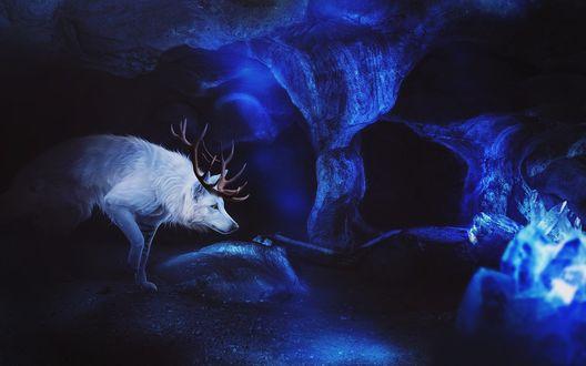 Обои Рогатый волк в ледяной пещере, by Fiirewolf