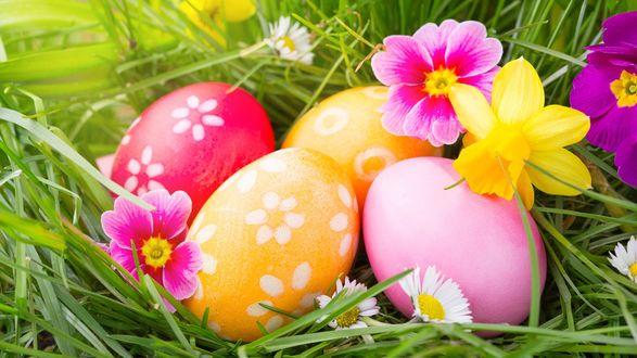Обои Пасхальные яйца в траве