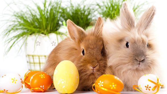 Обои Кролики сидят рядом с пасхальными яйцами