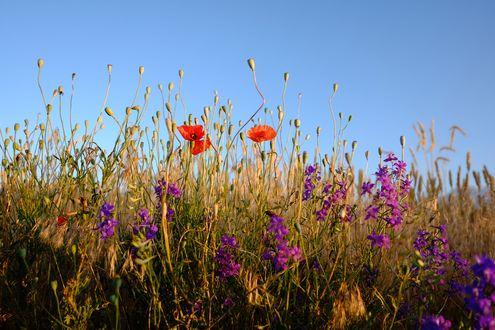 Обои Полевые цветы на лугу