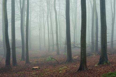 Обои Деревья в тумане в лесу