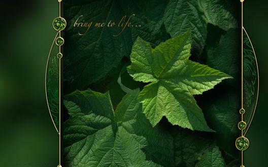 Обои Коллаж с листьями смородины (bring me to life), автор Nathan Smith