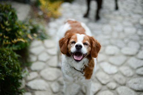 Обои Довольная собака с открытым ртом