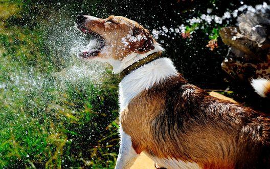 Обои Пес играет с водой