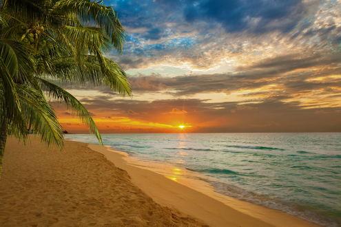 Обои Пляж и пальма на Карибском море во время заката