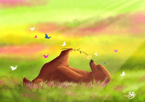 Обои Медведь лежа на поляне нюхает цветок, автор YaPpy