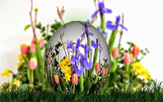 Обои Пасхальное яйцо, разрисованное цветами, лежит в траве