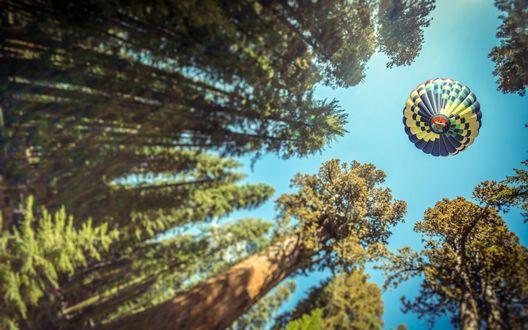 Обои Воздушный шар пролетает над верхушками деревьев