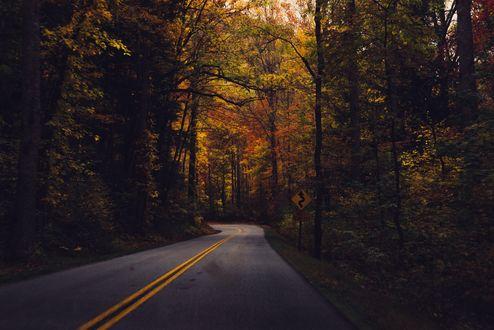 Обои Дорога проходящая через осенний лес